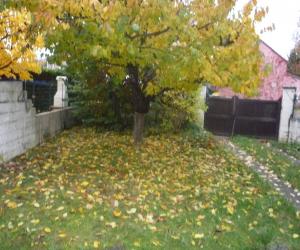 Remise en état d'un jardin à MOISSY CRAMAYEL
