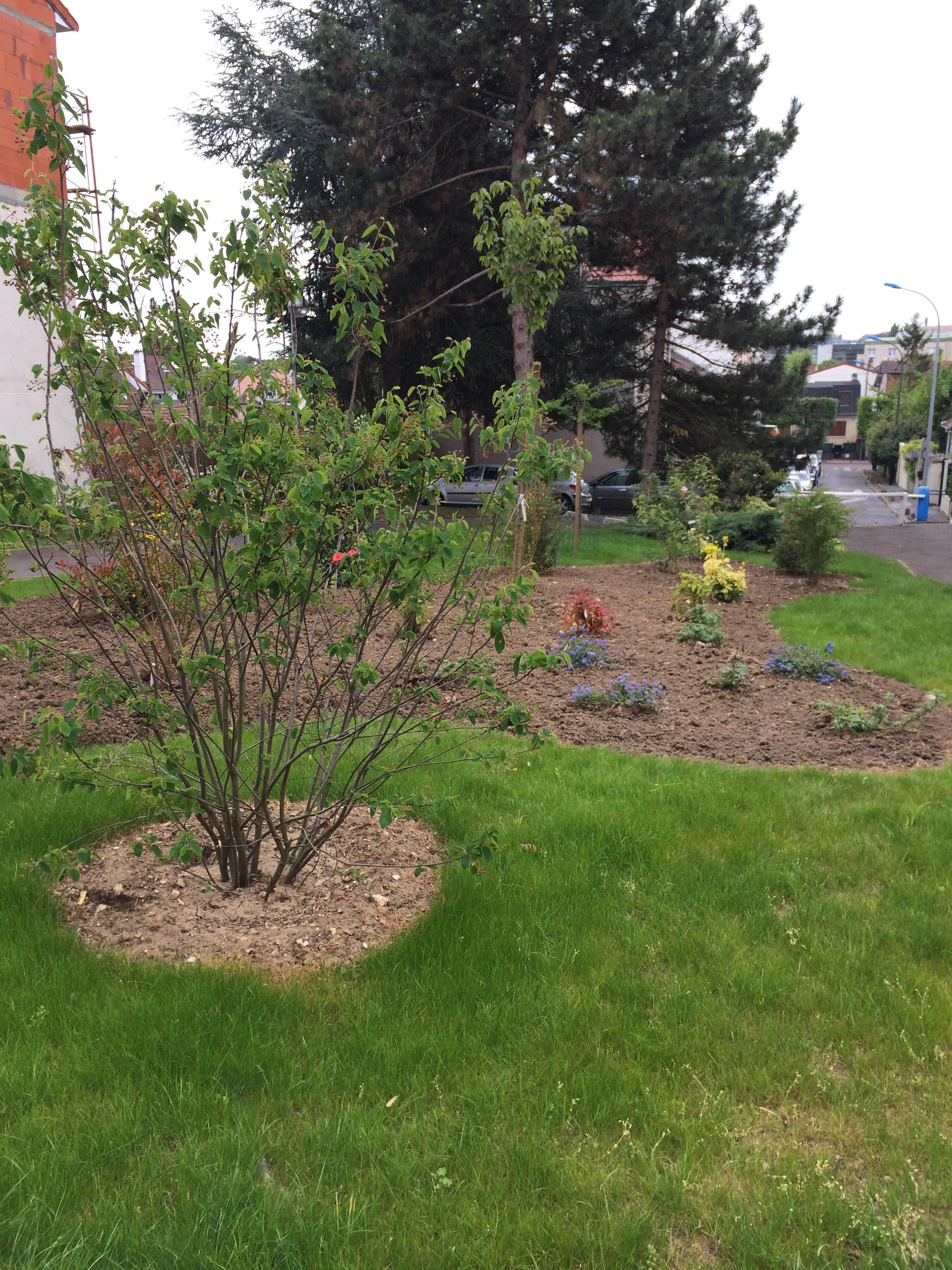 R alisation d un massif arbustif dans une copropri t for Entretien jardin copropriete