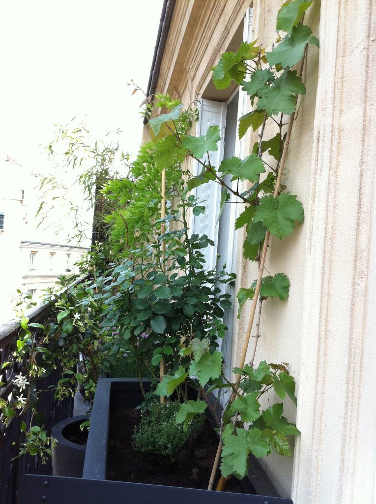 Am nagement balcon paris 4e arboriflore entreprise for Amenagement balcon terrasse appartement