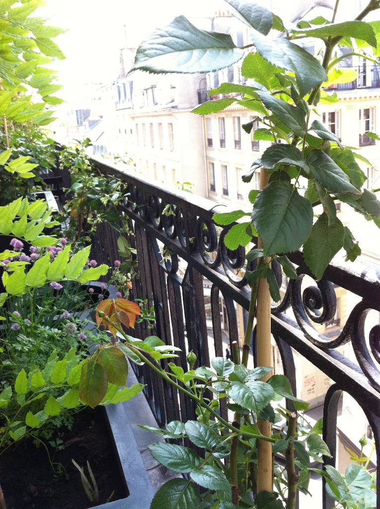 9 arboriflore entreprise paysagiste paris ile de france - Amenagement balcon paris ...