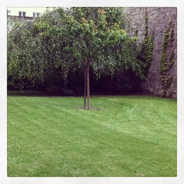 Entretien de jardin des copropri t s 91 92 94 78 for Entretien jardin particulier 78