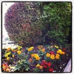 Fleurissement Annuelle